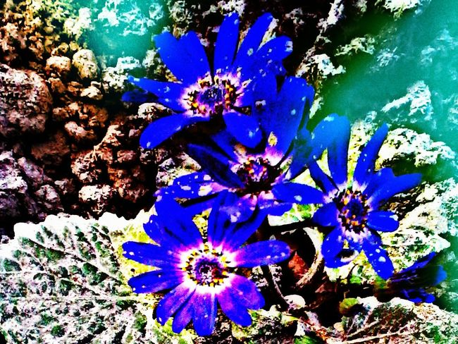 Showcase: February Flowers Plants And Garden Urban Garden Nature Photography Autum2016 Hdr_Collection HDR Effect Lighting Effects Flower#garden#nature#ecuador#santodomingoecuador#eyeEmfollowers#iphoneonly#nofiltrer#macro_gardenprettybeautifulfollowmesho [ [ Picartsstudio Picart Editing Maskingbeauty Image Overlaying The Week Of Eyeem My Best Shot Autumn🍁🍁🍁 EyeEm Nature Lovers Winter Flowers Autumn Collection Mobile_photographer Flowers Getty Images Lighting Decoration Nature_collection Lighting Effect