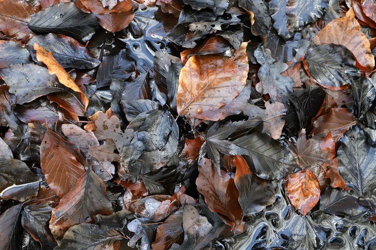Full frame shot of wet autumn leaves on ground
