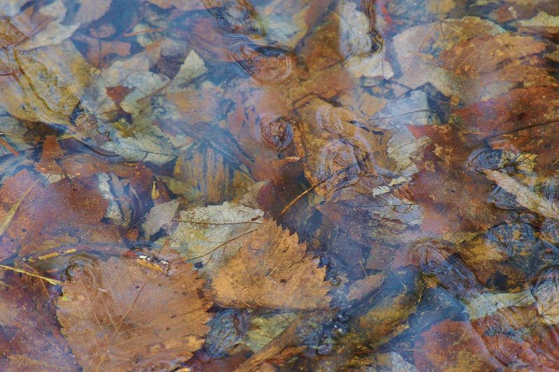 Leaves under icy pond water Abstract Detail Geometry Leave Under Icy Water Messy Natural Pattern Nature, Abstract, Wet Pattern Textured