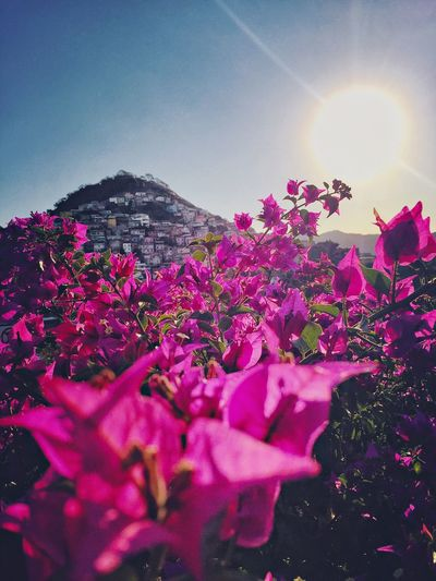 Pink flowers blooming against bright sun