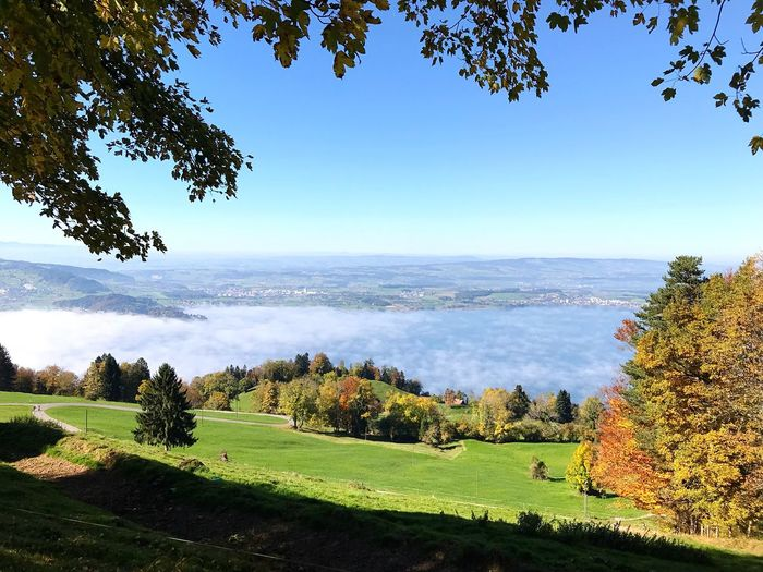 A fog over the lake Tree Beauty In Nature Nature Green Color Scenics Growth Tranquil Scene Grass Day No People Tranquility Landscape Field Idyllic Outdoors Sky Clear Sky Blue Zugerberg Switzerland