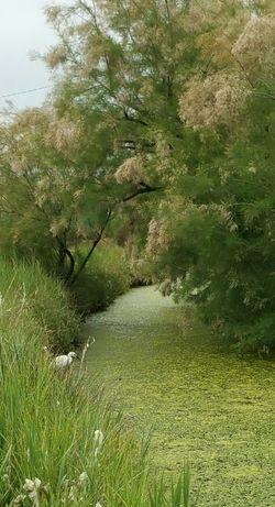Nature Laguna Di Venezia  Garzetta