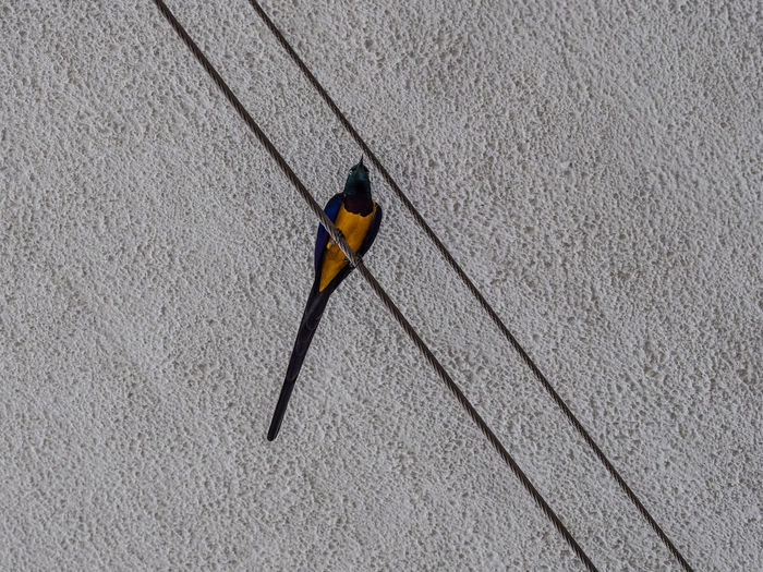 High angle view of a bird on wall