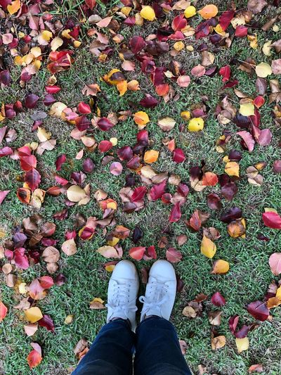Low section of person standing by rose petals over grass
