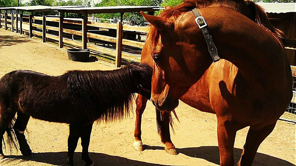 Horse Pony Prostheticleg Therapeutic Rescue Horse Fence