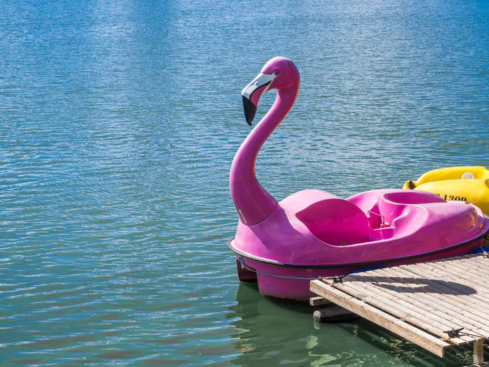 Pink Flamingo Pedal Boat Floating On Water In Lake