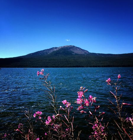 Flower Mountain Blue Fragility Beauty In Nature Scenics Growth Clear Sky Plant Tranquil Scene Nature Water Tranquility Mountain Range Freshness Pink Color In Bloom Springtime Wildflower Majestic