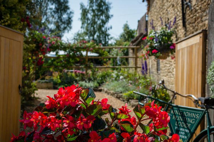 Red flowering plants in yard against building