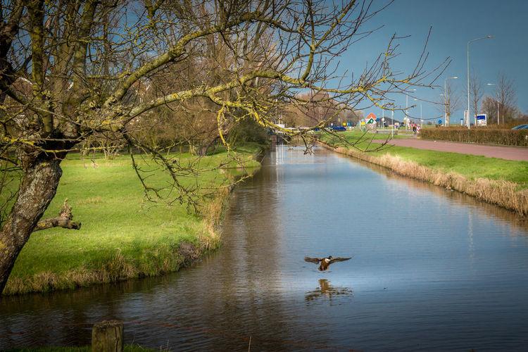 Ducks in a river