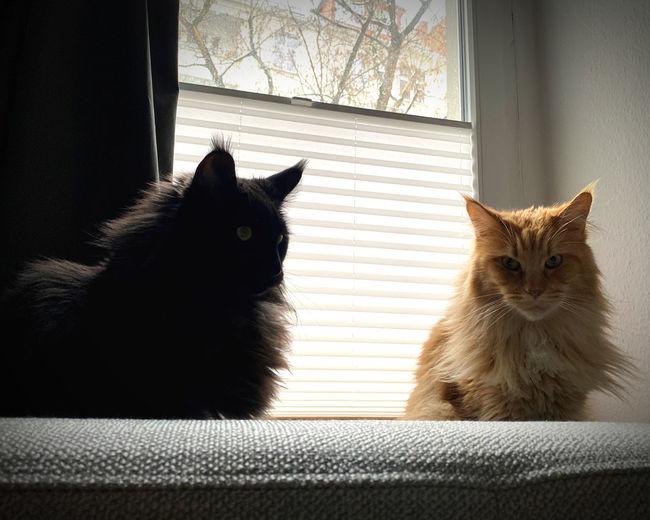 Cat sitting on window