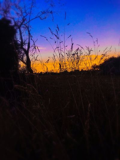Field EyeEm Nature Lover EyeEmNewHere Sky Sunset Nature Silhouette Beauty In Nature No People Scenics - Nature Tranquility Plant Orange Color Landscape Environment Field EyeEmNewHere