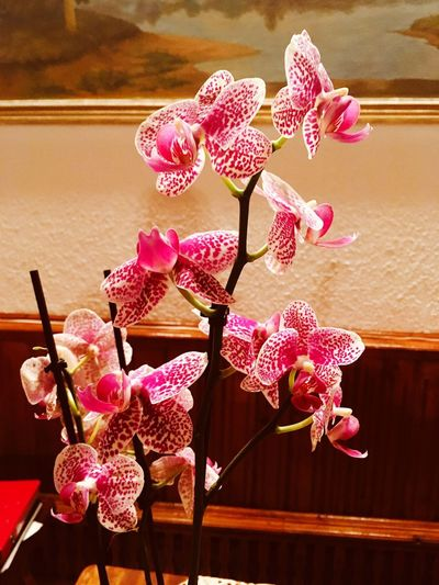 Flowers Flower Plant Flowering Plant Fragility Vulnerability  Beauty In Nature Pink Color Orchid Vase Nature Freshness Indoors  Close-up No People Growth Inflorescence Petal Table Flower Head