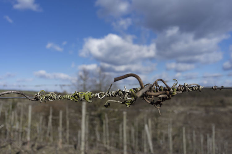 Canon Fd 28, 2.8 Low Angle View Nature Tranquility Winter Beauty In Nature Bildfolge Chain Close-up Cloud - Sky depth of field Dof Focus On Foreground No People Outdoors Photography Scenics Selective Focus Sky Tranquil Scene Vine Vineyard Vintage Lens