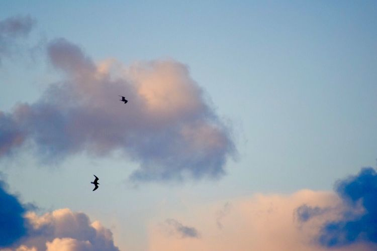 Lovely sky Exceptional Photographs Colourful Clouds Low Angle View Flying Sky Cloud - Sky Animals In The Wild Outdoors No People Beauty In Nature Spread Wings Airshow Two Birds Sky, Clouds - Copy Space