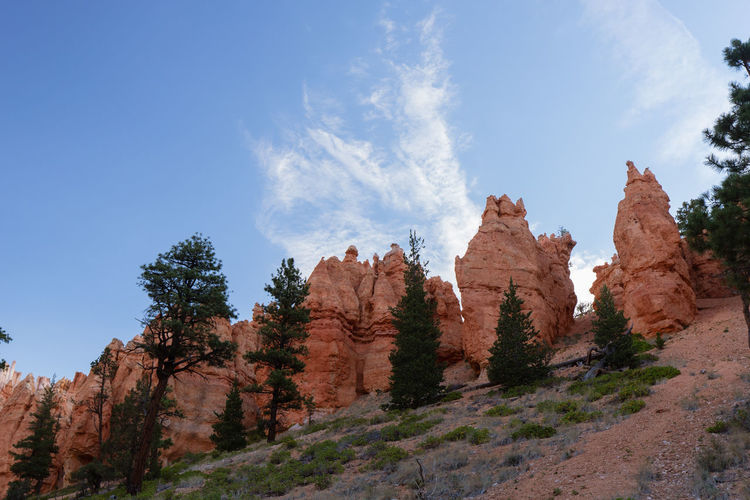 Bryce Canyon: different impressions of this great place Rock Rock - Object Rock Formation Nature Tranquility Beauty In Nature Non-urban Scene No People Eroded Bryce Canyon Tree Sky Plant Tranquil Scene Scenics - Nature Low Angle View Day Land Cloud - Sky Growth Landscape Mountain Formation