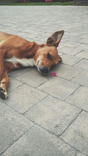 Dog Marie Stray Brown Flower Girlie Mylove passion for dogs