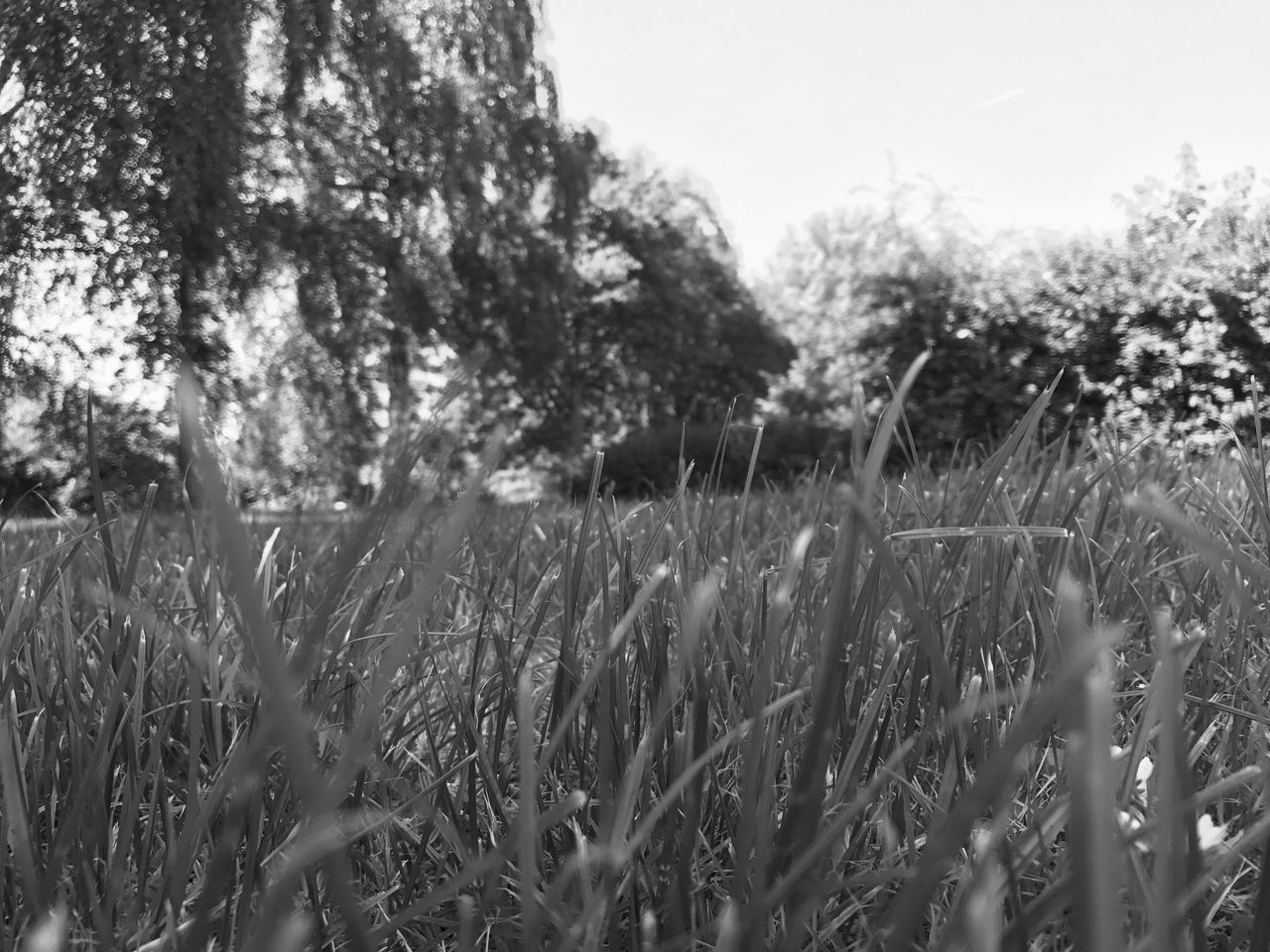 growth, nature, field, grass, plant, outdoors, no people, tree, tranquility, day, landscape, beauty in nature, close-up, sky