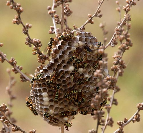 Insect Nature Close-up Outdoors Beauty In Nature Plant Nest Wasps🐝 Wasps Nest No People