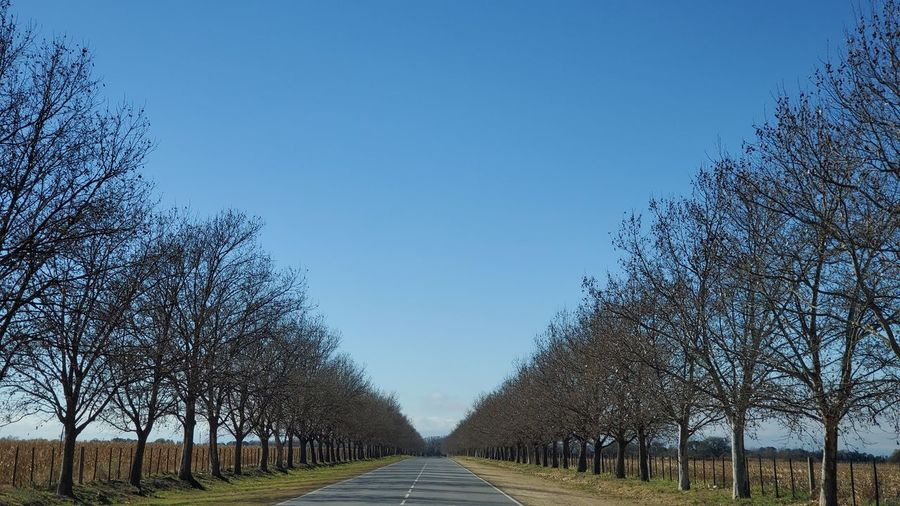 Empty road amidst trees against clear blue sky