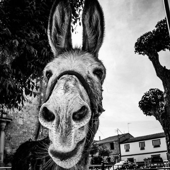 Wild smile Rural Scene Smiling Donkey Animal Head  Animal Themes One Animal Close-up Day No People Domestic Animals Portrait Looking At Camera Mammal Outdoors