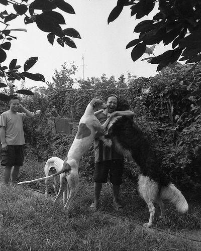 许多艺术家都喜欢养宠物,以猫狗最常见。不乏名贵品种、大型猛犬。有些是为安全起见,有些是爱好。骆驼尤其爱好。图为骆驼养的大型名贵犬种 灵缇 。2004年 1613 10909308 5093 12820764