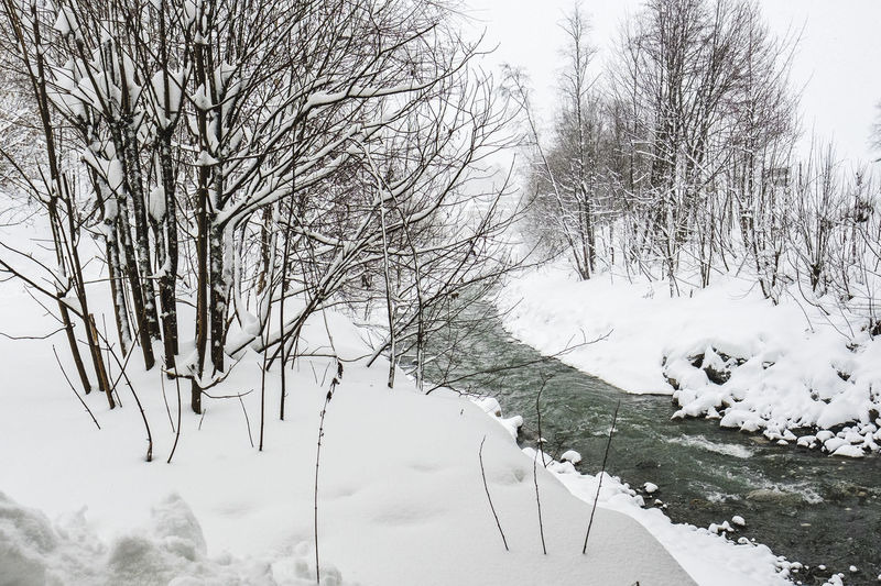Winter Snow Cold Temperature Tree Bare Tree Plant Beauty In Nature Nature No People Day Tranquility Branch Scenics - Nature Sky White Color Tranquil Scene Covering Field Frozen Outdoors Extreme Weather Snowcapped Mountain Ditch