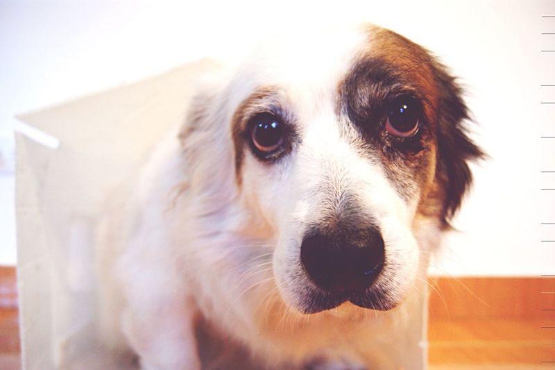 Dogslife Sadness