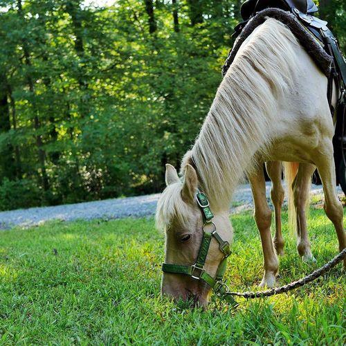 Same pony Pony Ride