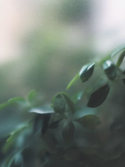 Misty green Silence Silent Moment Silent Peaceful Peace Green Leaf Close-up Green Color Nature No People Plant Glass - Material Leaf Outdoors Selective Focus