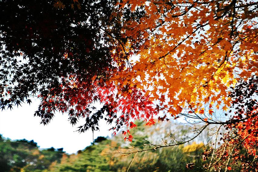 Munkyautumn] Autumn Colors Autumn Leaves South Korea Korea Munkyung Munkyungsaejae