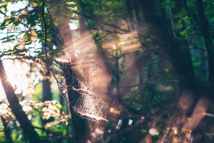 Close-up of sunlight streaming through trees in forest