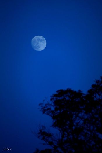 Yesterday night Moon https://youtu.be/vX4ViYxVli4 Love_blue Moon Light Silhouette Light And Shadow Taking Photos From My Point Of View Landscape Moonrise Hagging A Tree Kagoshima Good night🌙