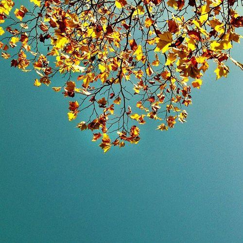 Simple #autumn shot with #bluesky ?? #ireland #insta_ireland #jj Autumn Ireland Bluesky Jj  Insta_ireland Insta_ireland_autumn
