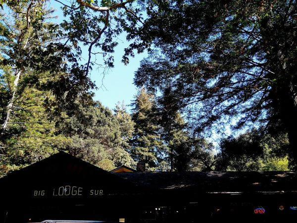 Tree Low Angle View Architecture Built Structure Outdoors Day No People Sky Nature Big Sur Lodge