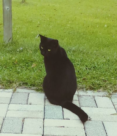 Cat turning Taking Photos