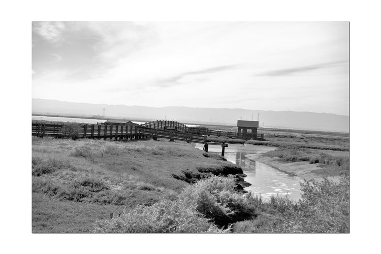 Newark Slough Trail 7 San Francisco Bay Don Edwards National Wildlife Refuge Nature Marsh Tidal Wetlands Picnic Hut Creek Bridge Bnw_friday_eyeemchallenge Hunters Cabin Reflection Reflections In The Water Boardwalk Reflected Glory Saltmarshes Carquinez Bridge Monochrome Photograhy Monochrome Black & White Black And White Photography Black And White Black And White Collection  Landscape_Collection Landscape_photography Native Grasses
