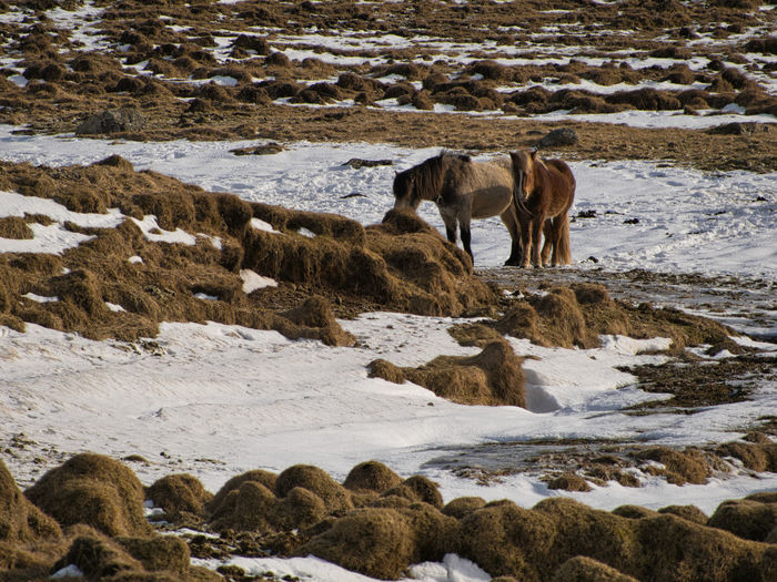 View of horse on snow covered land