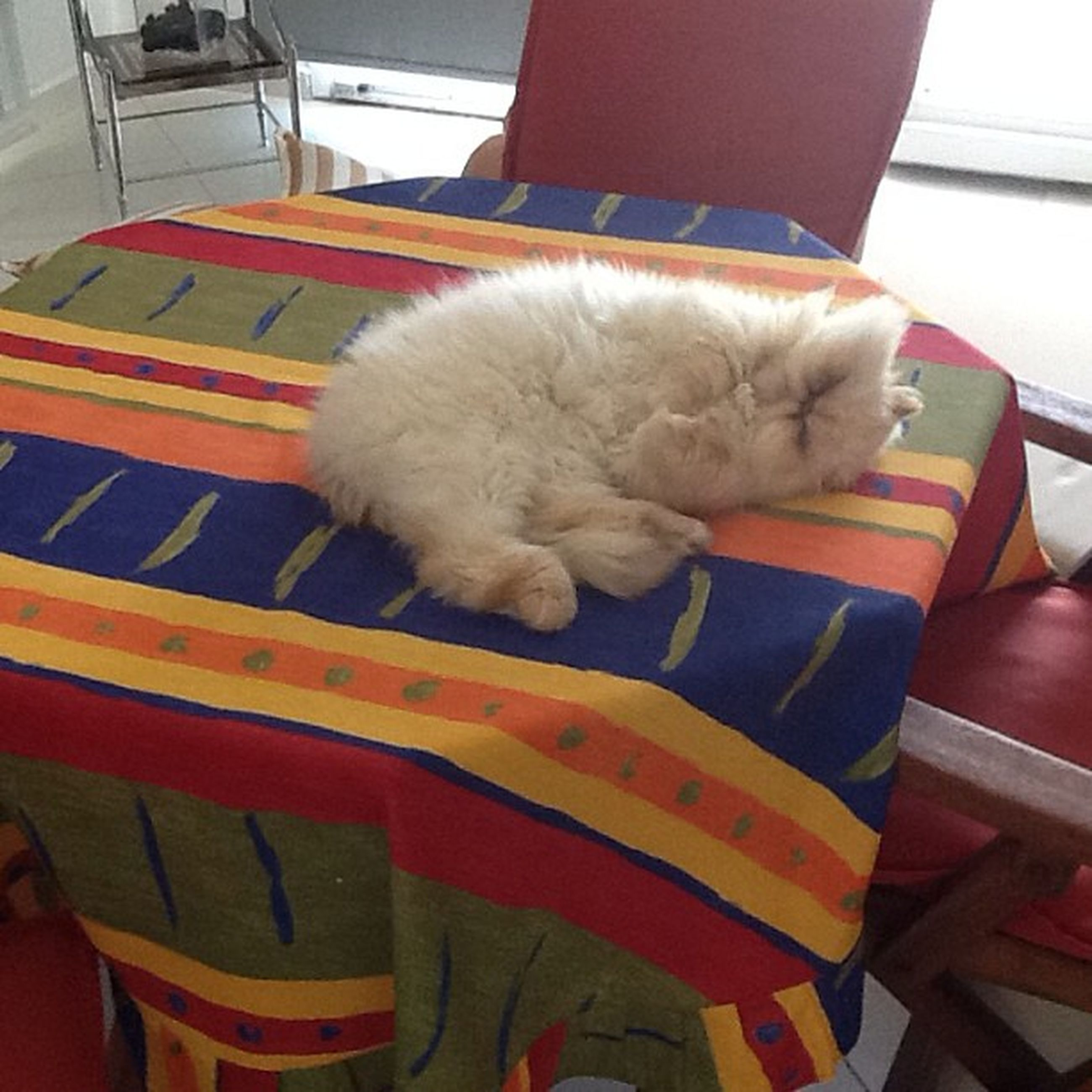 pets, domestic animals, animal themes, one animal, relaxation, indoors, mammal, domestic cat, resting, sleeping, cat, chair, lying down, high angle view, sofa, sitting, white color, comfortable, feline, seat