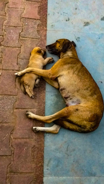 Pet Portraits Mammal Animal Themes Dog No People Outdoors Day Domestic Animals Pets JammuandKashmir Smvdu Katra Udhampur Mobilephotography Motog5plus Traveller Puppy. Love Hug Mother EyeEmNewHere Mix Yourself A Good Time The Portraitist - 2018 EyeEm Awards