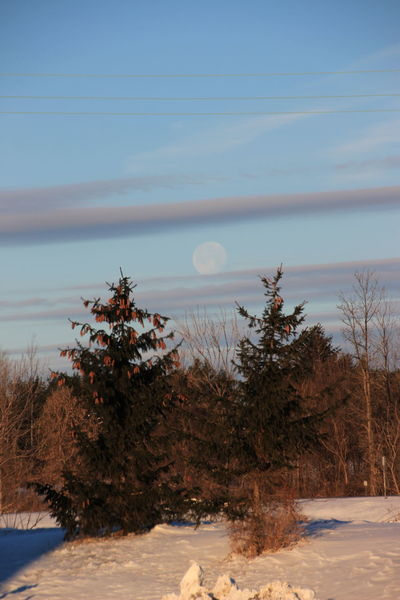 final wisp of the first supermoon of 2018 setting as the sun takes over Moon Setting With The Sun Morning Beauty In Nature Cold Temperature Light Moon Nature No People Outdoors Scenics Sky Snow Tree Whispy Clouds Winter