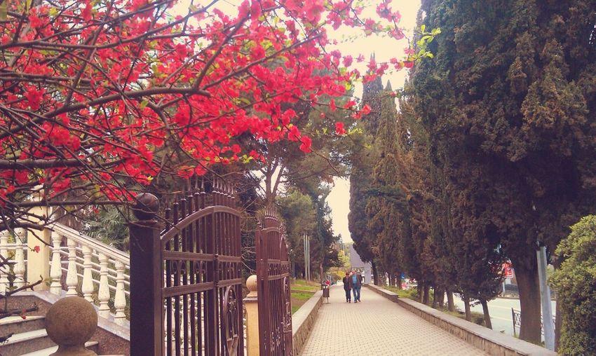 красота деревьяцветут радуетглаз