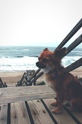 Sylt Chihuahua Dog Stormy Weather Stormy Sea Sea Life Beachphotography Dogphoto Wave Waves, Ocean, Nature Wavegodphotography Sand Eyesclosed Domestic Animals Pets One Animal Sea Animal Themes Mammal Animal Wood - Material Water Beach Horizon Over Water Sky No People Outdoors Day Nature Full Length Clear Sky Beauty In Nature