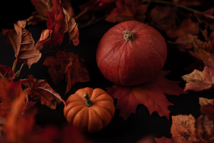 High angle view of pumpkins on autumn leaves