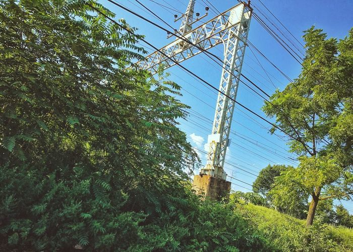 Cable Electricity  Fuel And Power Generation Power Line  Power Supply Tree Electricity Pylon Connection Low Angle View Day Complexity Technology Sky Industry Growth Outdoors No People Clear Sky Power Station Telephone Line Train Tracks Looking Up Blue Blue Sky Green