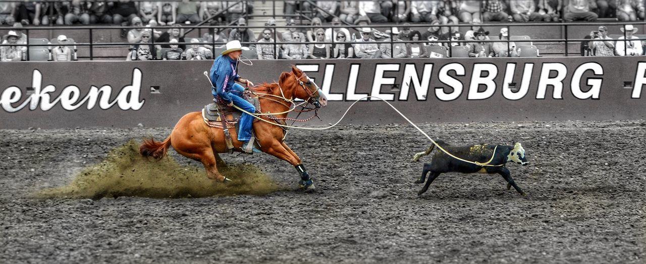 Horseback Riding Men Riding Horse Cowboys Washington Ellensburg Rodeo Rodeo Cattle Livestock Nikon D3100