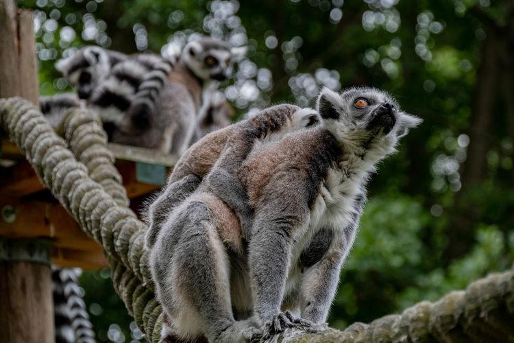 Mammal Focus On