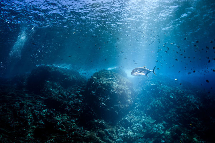 indonesia Underwater Sea Water UnderSea Swimming Animals In The Wild Adventure Sea Life Scuba Diving Sport Animal Aquatic Sport Animal Themes Exploration Animal Wildlife Marine Nature Coral Invertebrate Outdoors Underwater Diving
