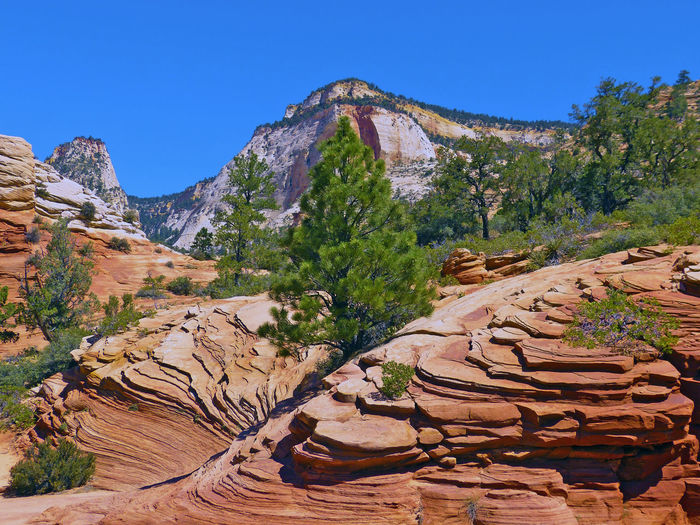 USA Road Trip Zion National Park Orange Color Orange Rocks Hills Outdoors No People Beauty In Nature
