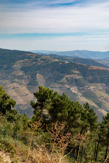 Douro valley landscapes , Portugal Douro  Pattern, Texture, Shape And Form Portugal Beauty In Nature Day Environment Growth High Angle View Idyllic Land Landscape Mountain Mountain Range Nature No People Non-urban Scene Outdoors Plant Scenics - Nature Sky Tranquil Scene Tranquility Tree