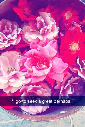 Plants Rose🌹 Plants 🌱 Pink Red Flowers Beautiful Lighting